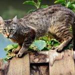 Croquettes pour chat : avec ou sans céréales ?