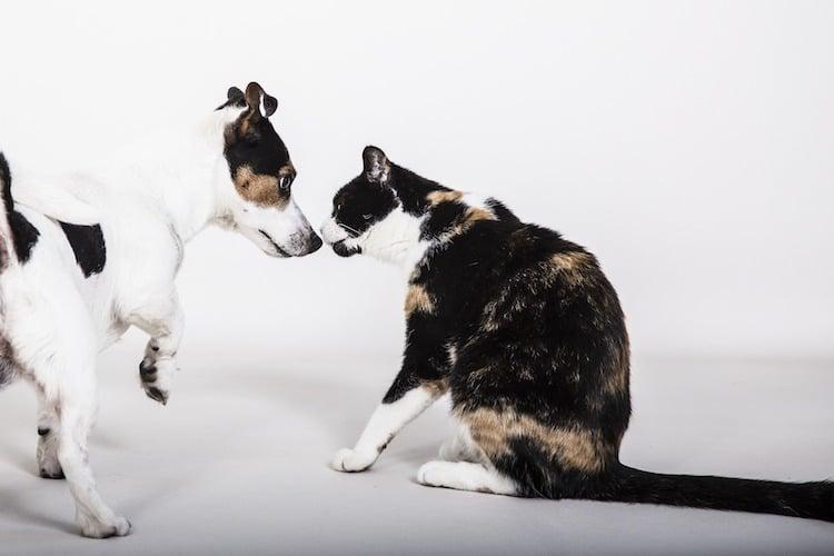 chien et chat qui se reniflent