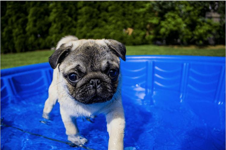 chien qui patauge dans l'eau en plein soleil