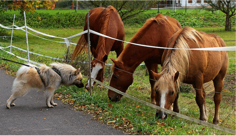 chien rencontre chevaux