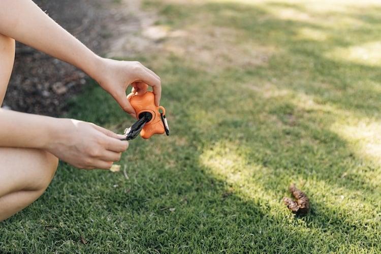 nettoyer l'environnement du chien