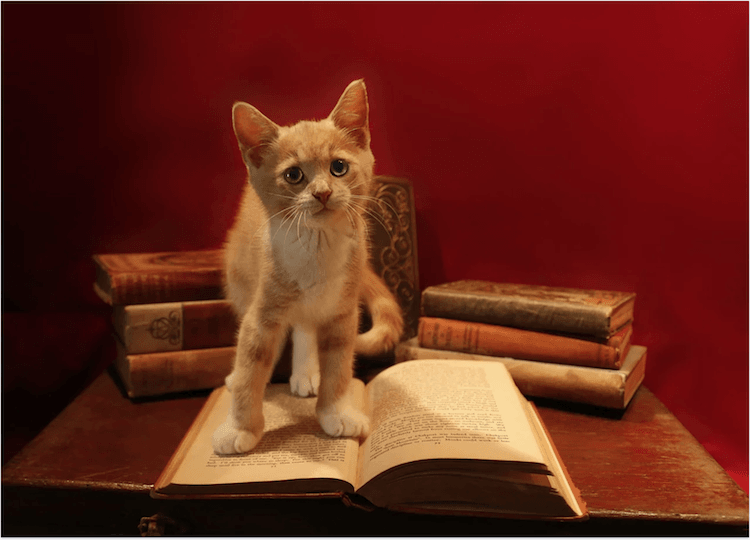 chat livre