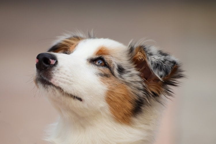 5 besoins fondamentaux des chiens