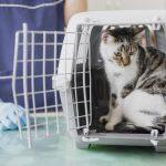 Mon chat a une collerette : comment le nourrir ?