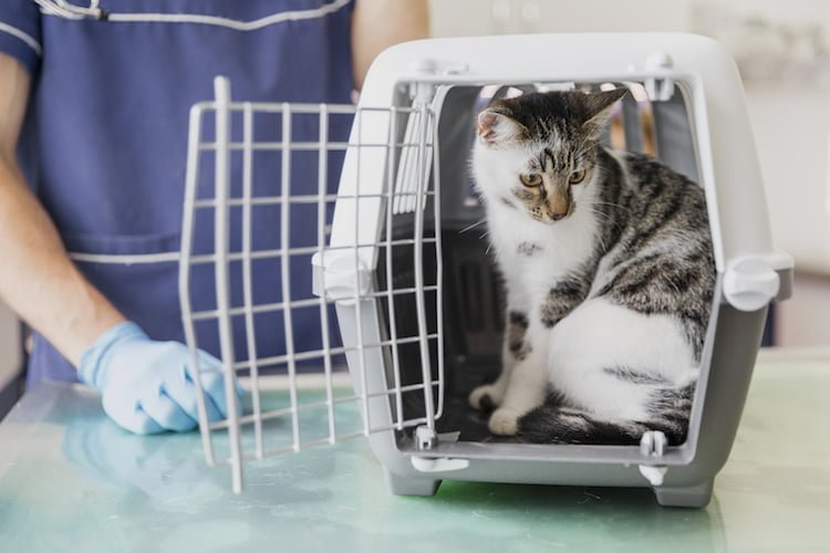 chat-veterinaire-soins