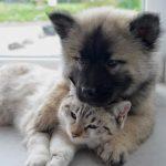 Épilepsie chez le chien et le chat : comment la diagnostiquer ?