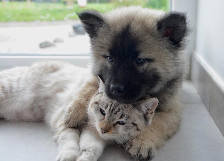 epilepsie chez le chat et le chien