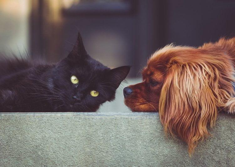 quelle gamelle choisir pour mon chat et mon chien ?