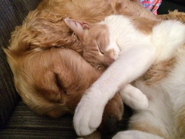 chat chien ensemble