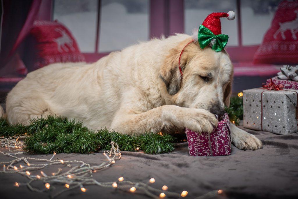 chien avec cadeaux